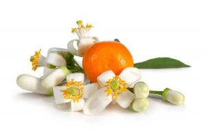 Plant Therapy Essential Oil Neroli