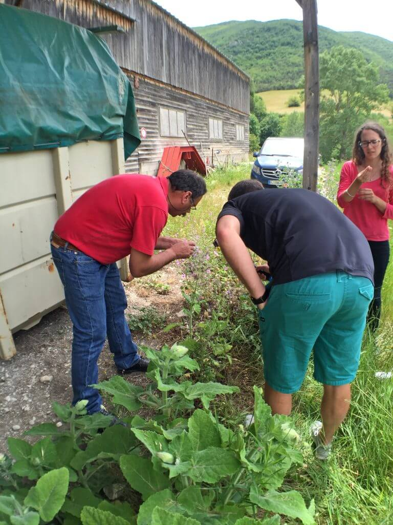 Paul with volunteer Clary Sage plants