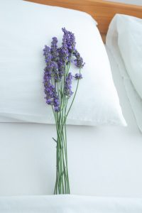 Lavender Pillow Reduced