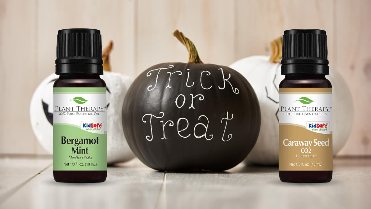 October Oils Of The Month Bergamot Mint And Caraways Seed Co2 Ys Diffuser Untuk Diy It Certainly Was Not A Trick This But Treat Plant Therapy Sent Out Two Products Caraway Were Features For