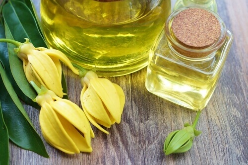 ylang ylang flower essential oil