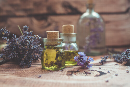 lavender oil fresh flowers