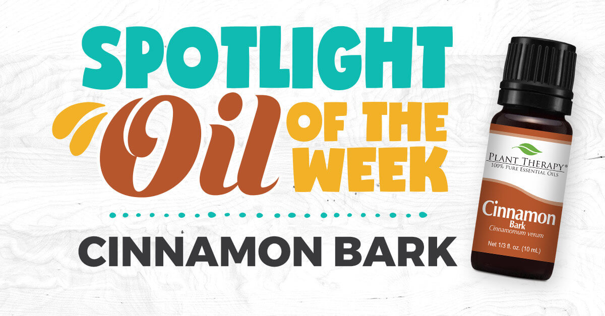 Cinnamon Bark essential oil spotlight
