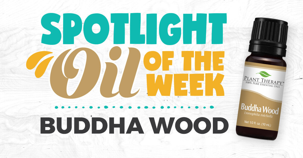 buddha wood essential oil spotlight oil of the week