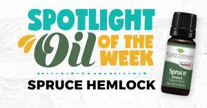 Spruce Hemlock: Essential Oil Spotlight of the Week