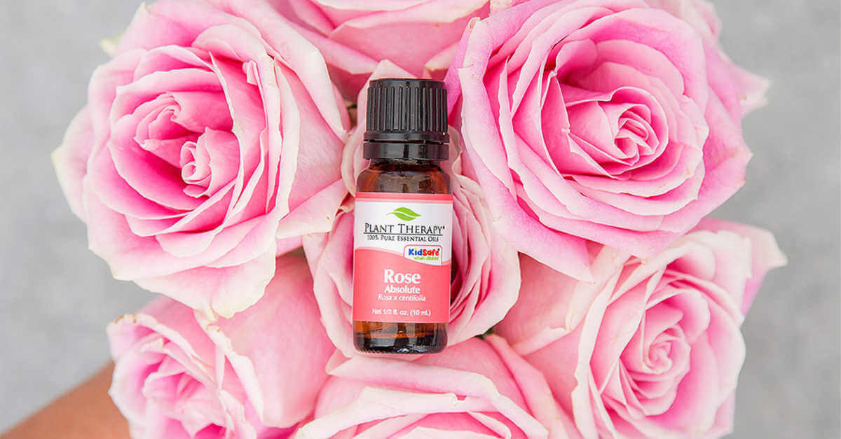 plant therapy rose absolute essential oils