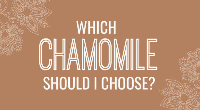 Chamomile German Vs. Chamomile Roman Essential Oil