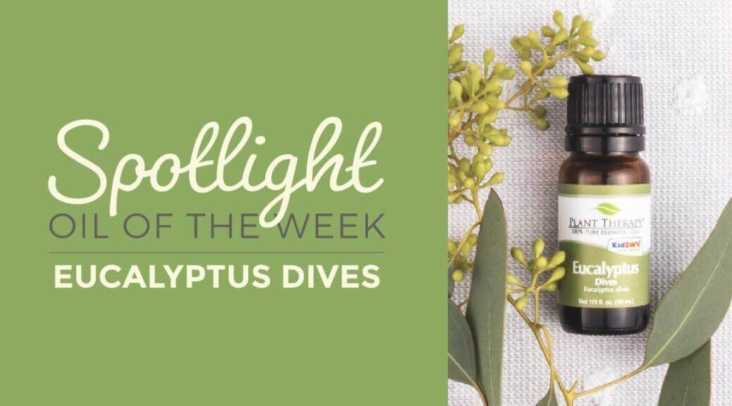 Eucalyptus Dives Essential Oil Plant Therapy