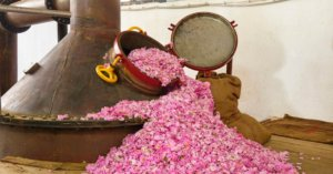 Pink rose petals spilling out of a still