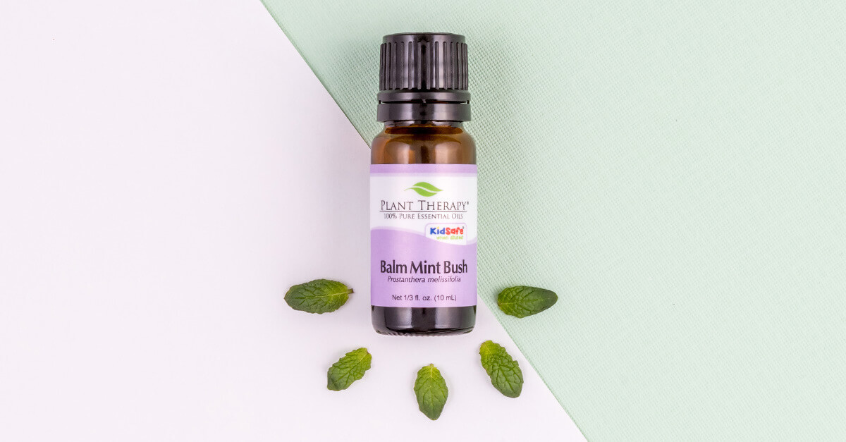 4 Ways to Use Balm Mint Bush