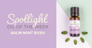Balm Mint Bush: Essential Oil Spotlight of the Week