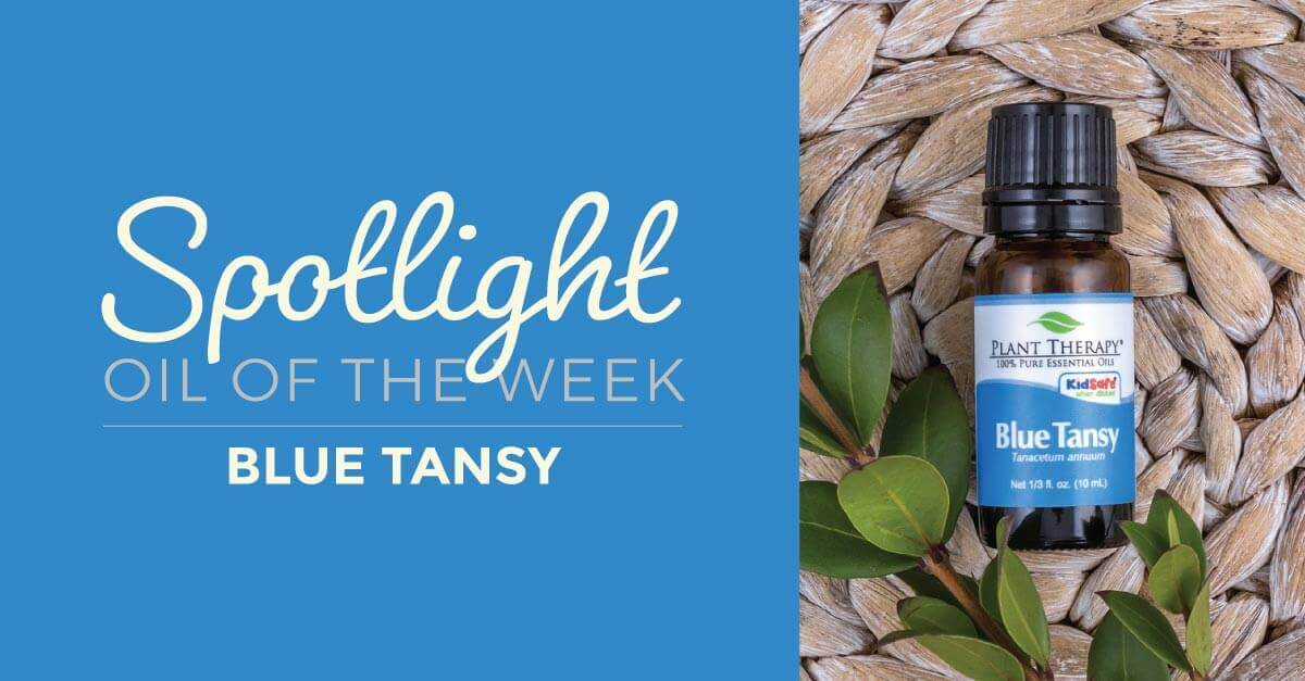 Essential Oil Spotlight of the Week: Blue Tansy