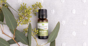 eucalyptus dives essential oil on white background