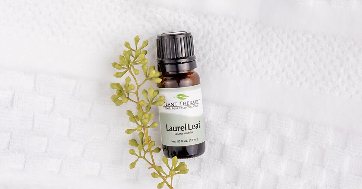 laurel leaf essential oil