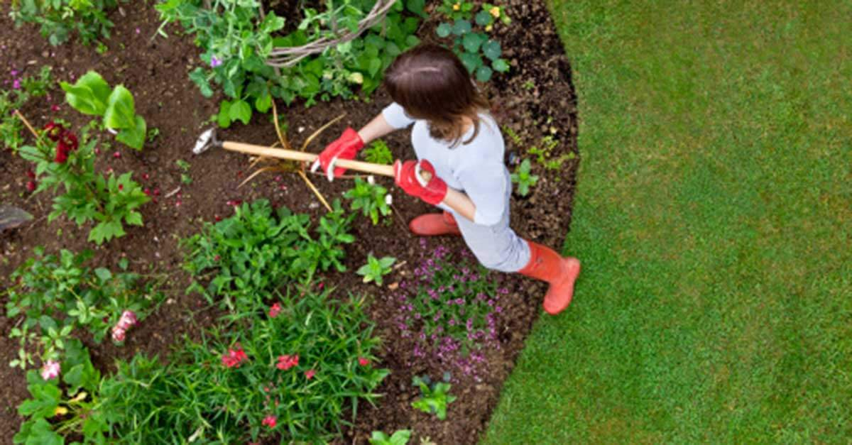Plant Therapy Essential oils for cleaning