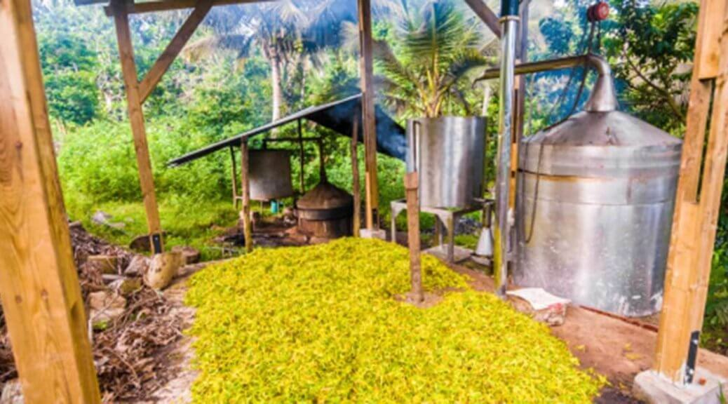 ylang ylang distillery for essential oil extraction