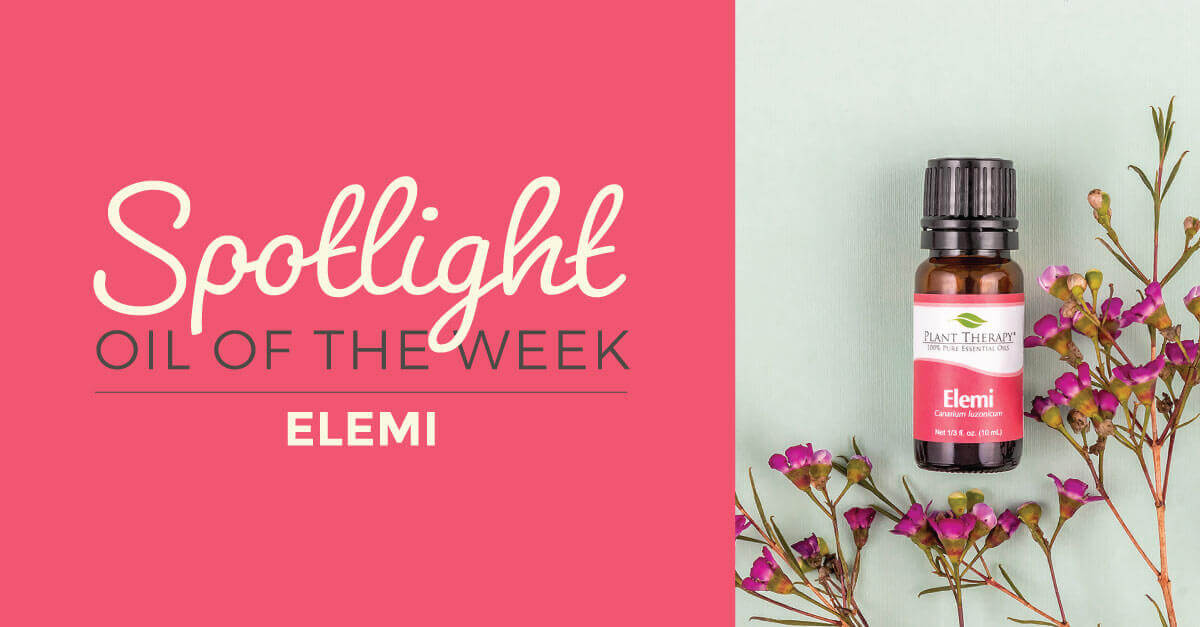 Spotlight Oil of the Week elemi essential oil plant therapy