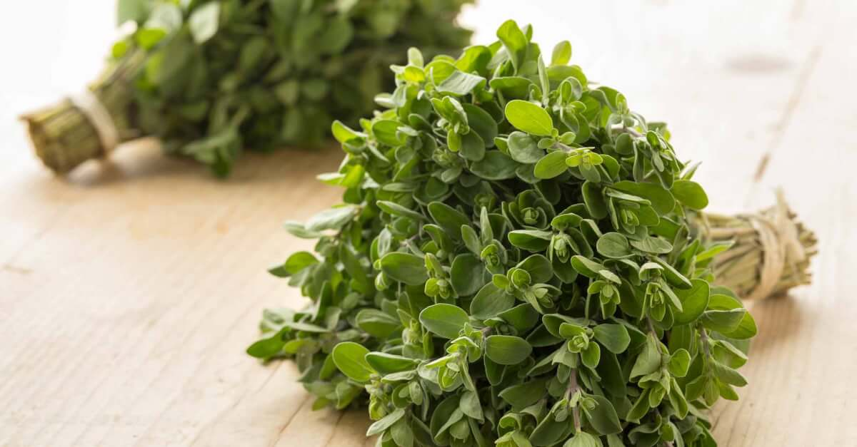 bunches of sweet marjoram