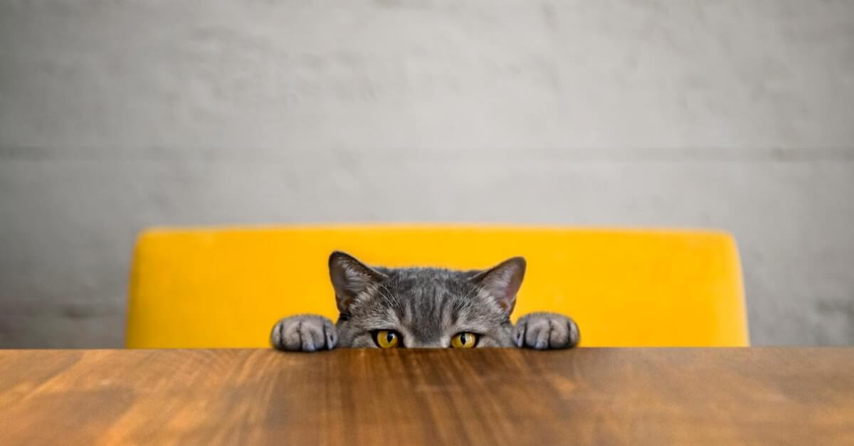 Cat peaking up from a table