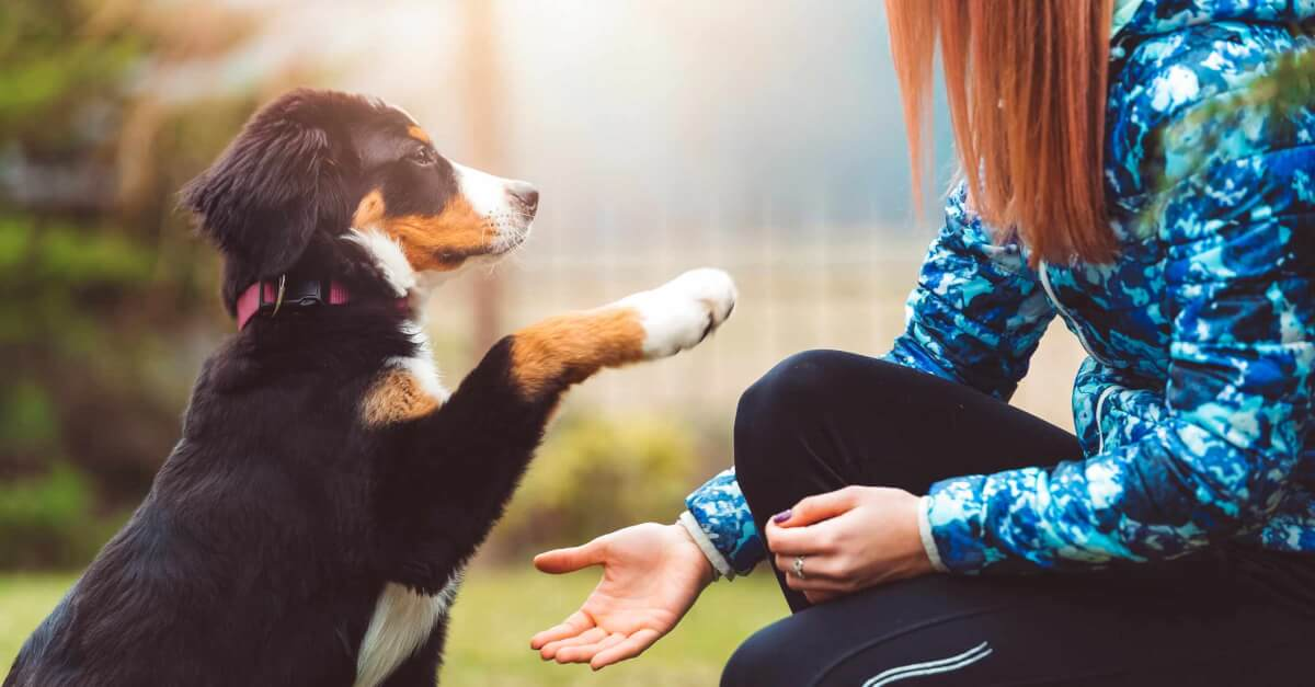 essential oils can support a dog's health when used responsibly