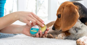 Paw Balm from Plant Therapy