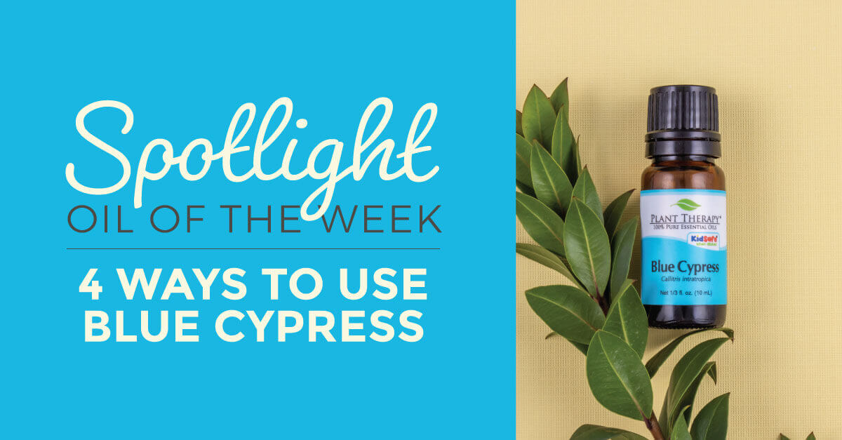 Blue Cypress Essential Oil from Plant Therapy