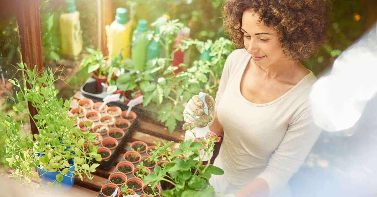 Essential Oils and Gardening: Natural Tips for Maintaining Your Garden