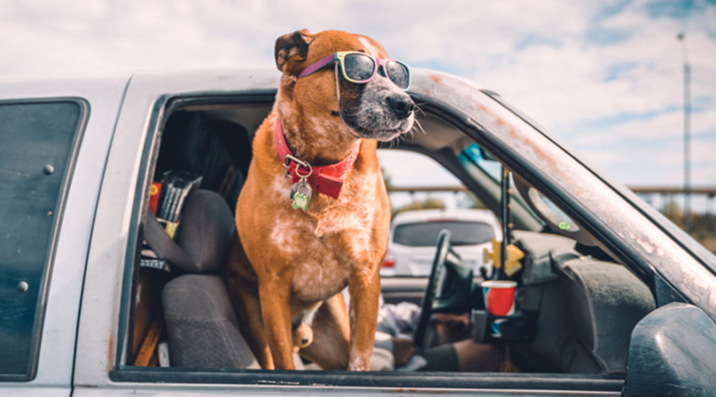 Summertime dog out of car window