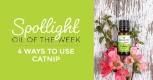 4 Ways to Use Catnip: Our Spotlight Essential Oil of the Week