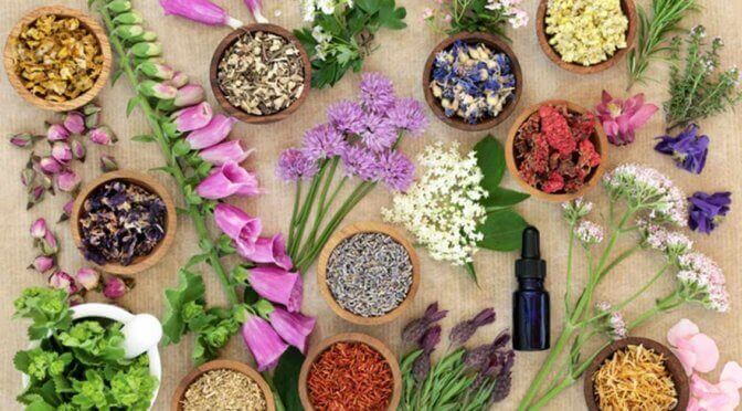 Picture of different fowers and herbs on a table