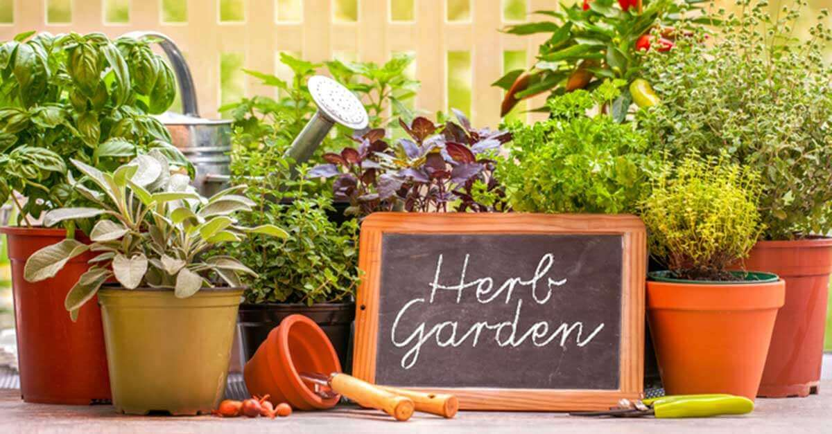 Healing Garden: Growing Herbs for Natural Health