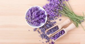 So You Hate Lavender... Now What?