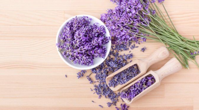 fresh lavender buds on a wood surface