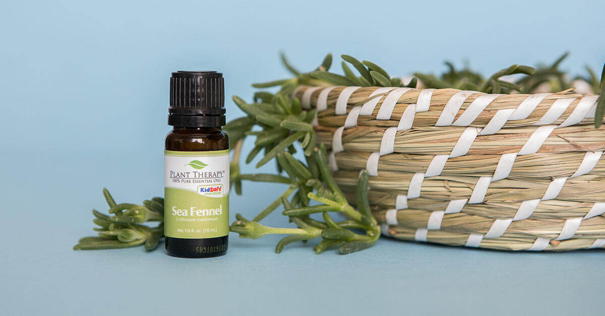 Plant Therapy Sea Fennel Essential Oil