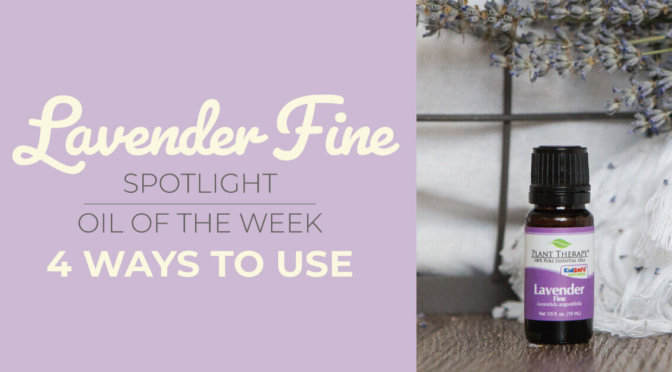 Top 4 Ways to Use Lavender Fine Essential Oil