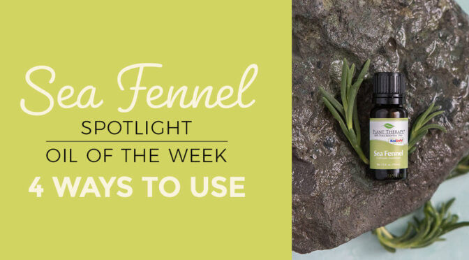 Top 4 Ways to Use Sea Fennel Essential Oil