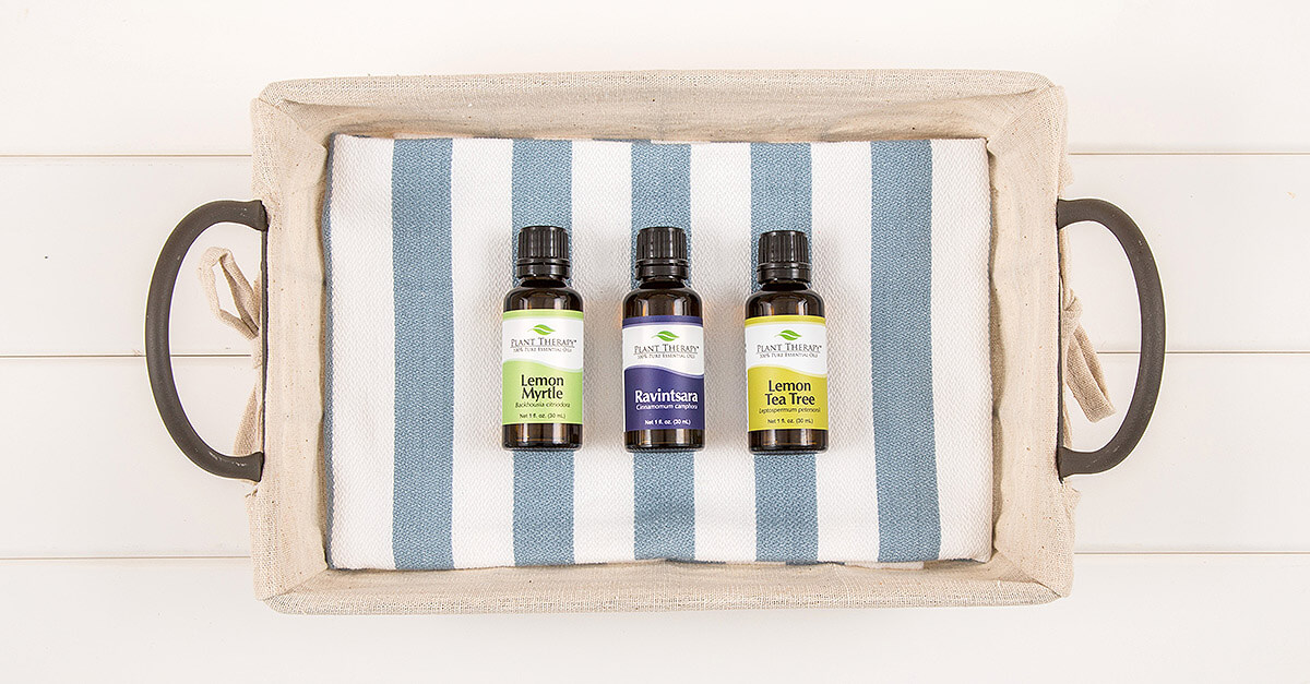 Plant Therapy Lemon Myrtle, Lemon Tea Tree and Ravintsara Essential Oils
